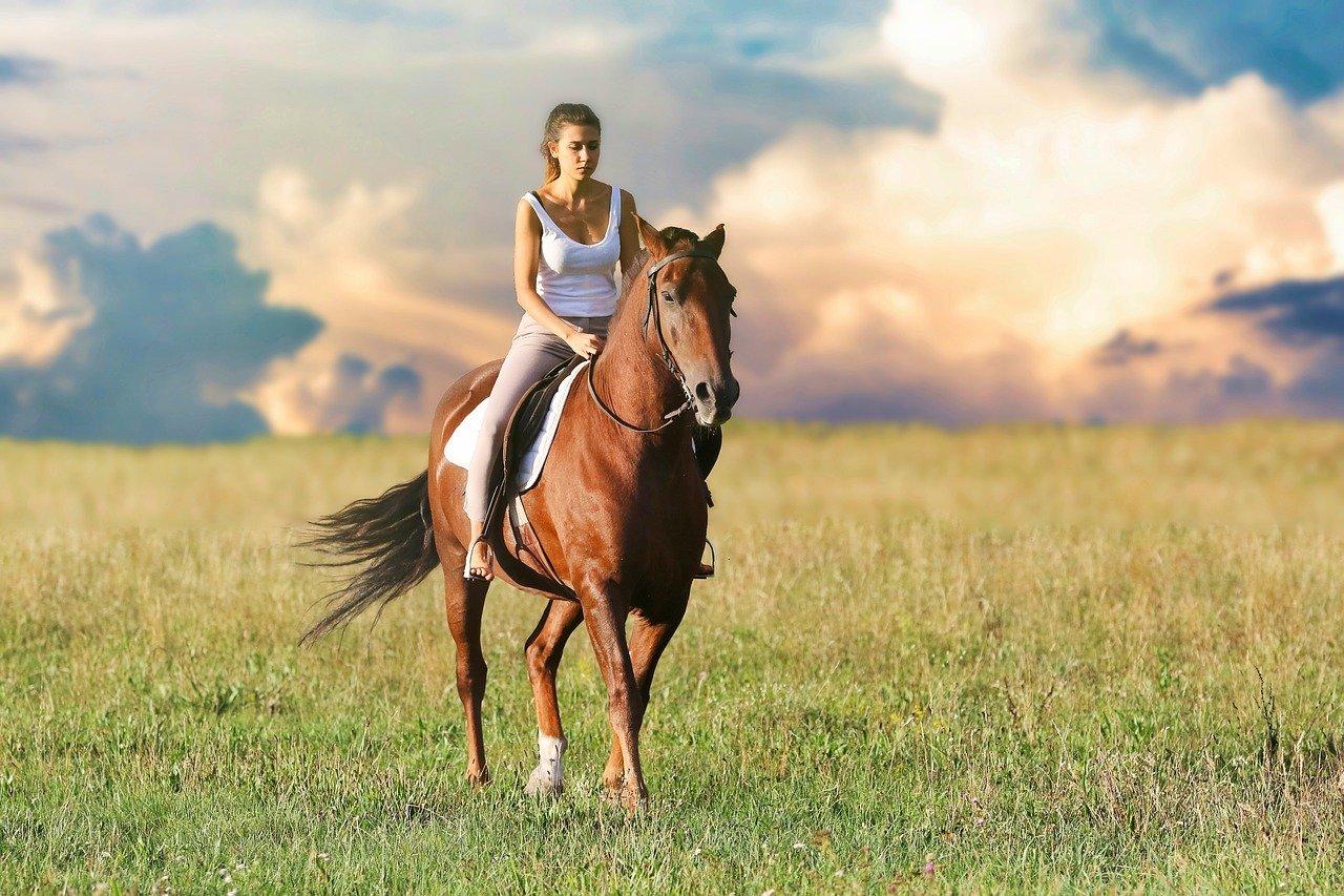 seguros para caballos y seguro para caballos de terapias